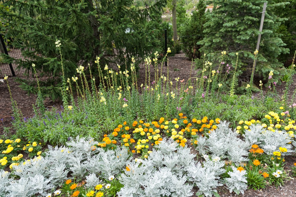 Frederik Meijer Gardens – The Mitten Adventure